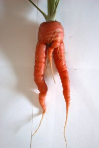 carrot_penis_by_ocnudes