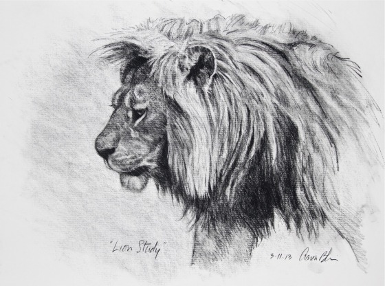 Lion+Study